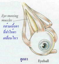 eye and seeing